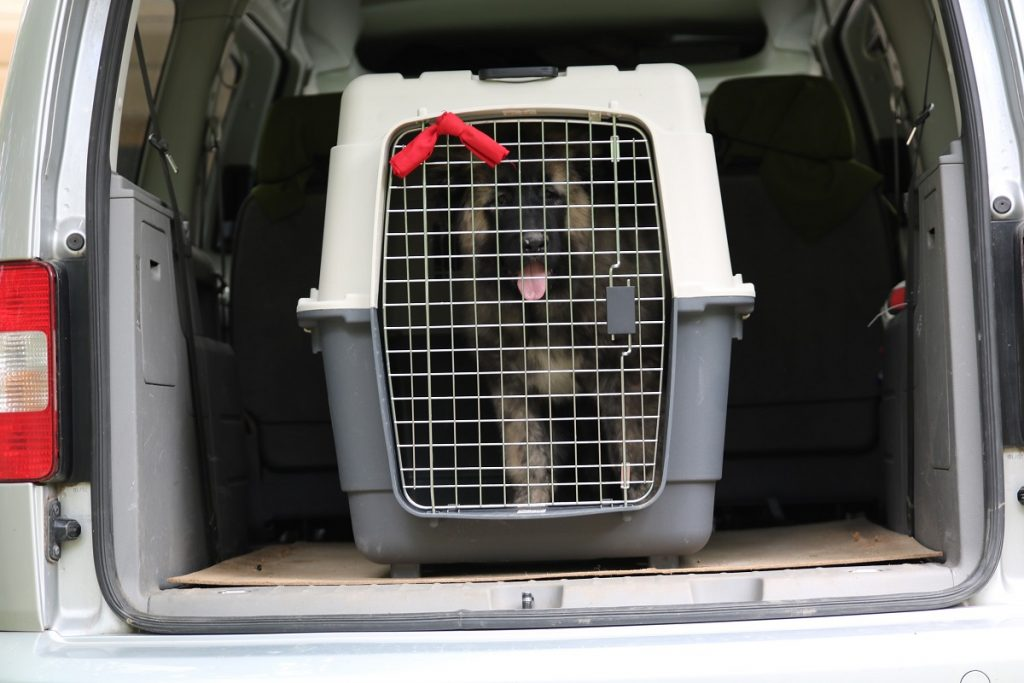 Transport-your-dog-in-EU