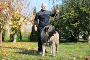 Caucasian Shepherd Female and her owner