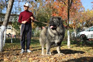 Caucasian Shepherd and his Owner