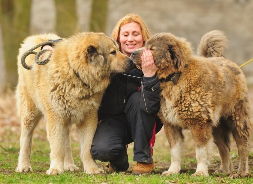 caucasian shepherd breed