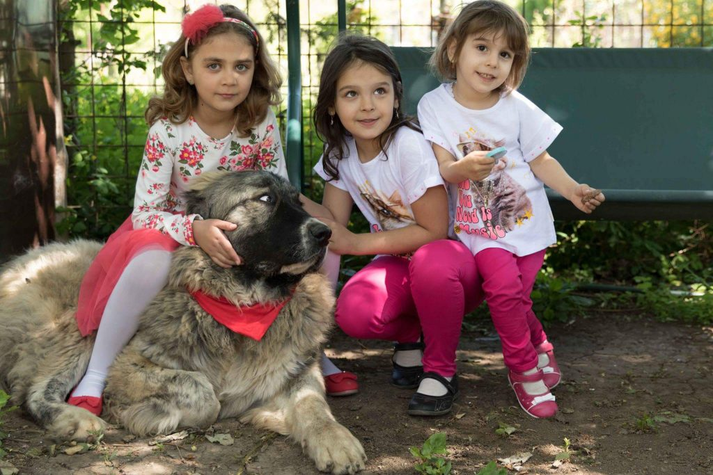 Caucasian Shepherds around children